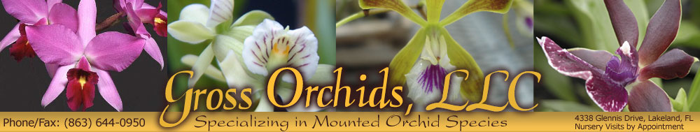 Mounted Orchid Species, Lakeland, Florida, Nursery Visits by Appointment, Call 863-644-0905